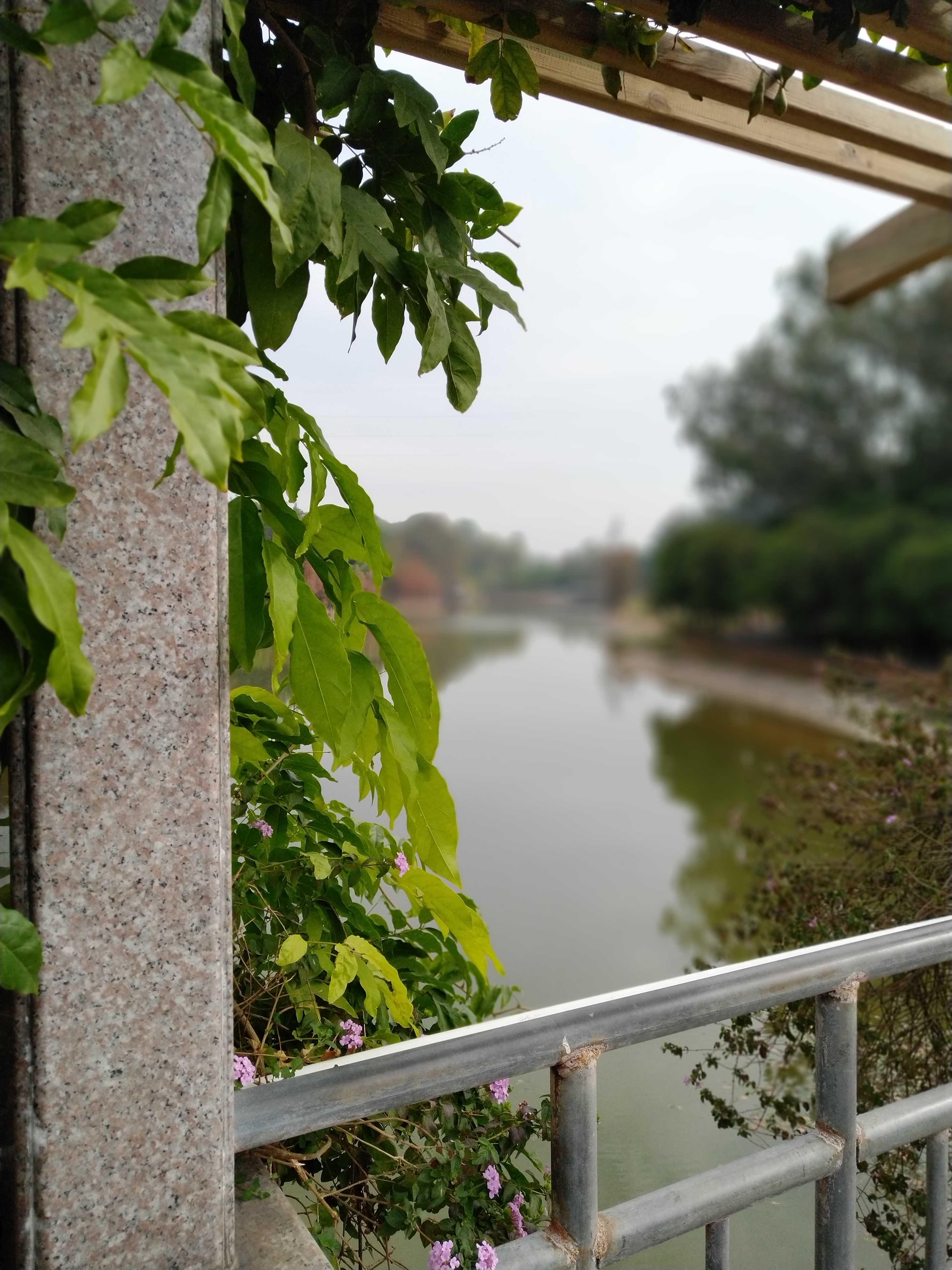 植物园闲庭信步,各种珍稀植物,感叹自然变化无穷