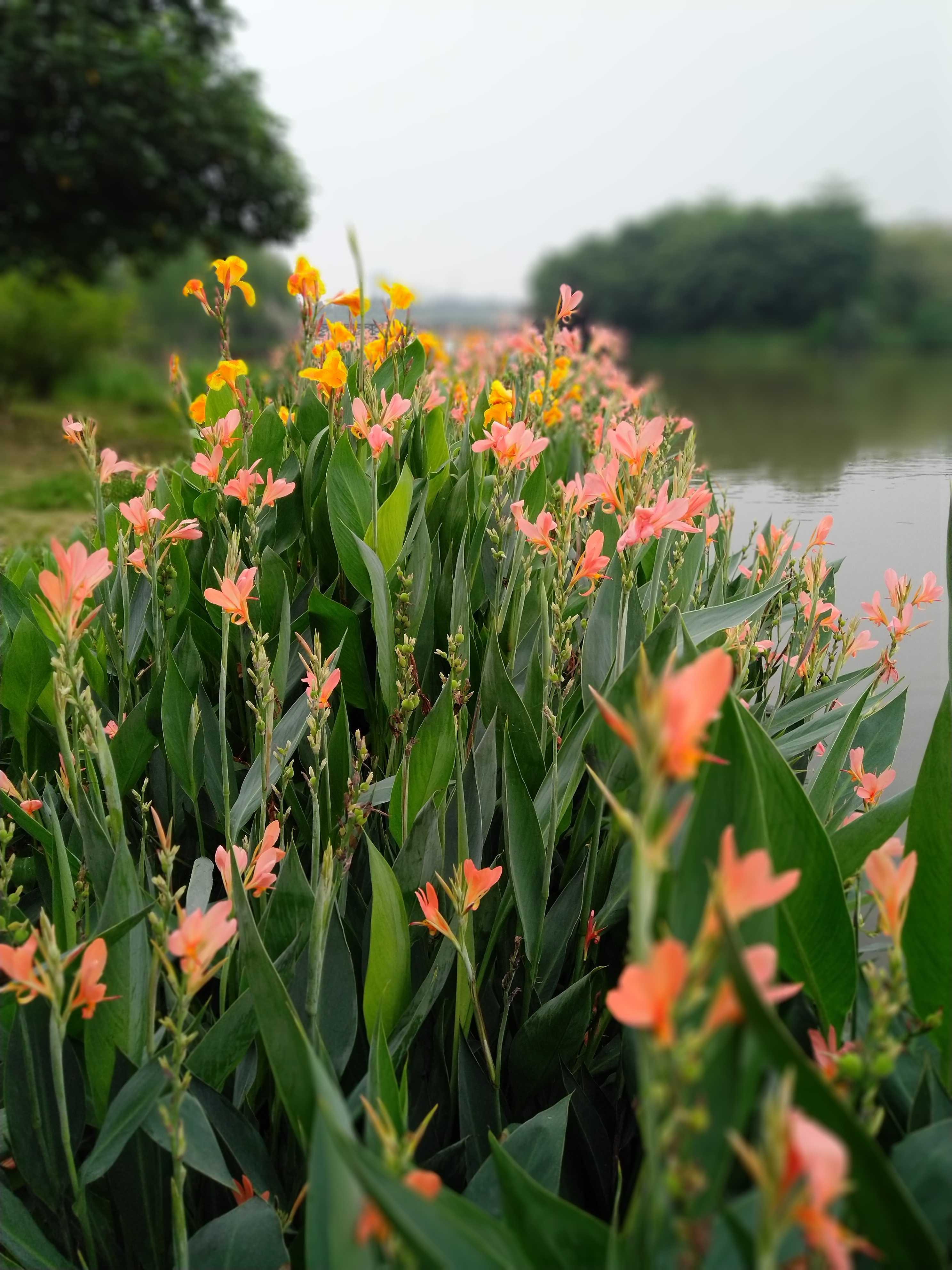 湿地公园景致特好,散步好去处