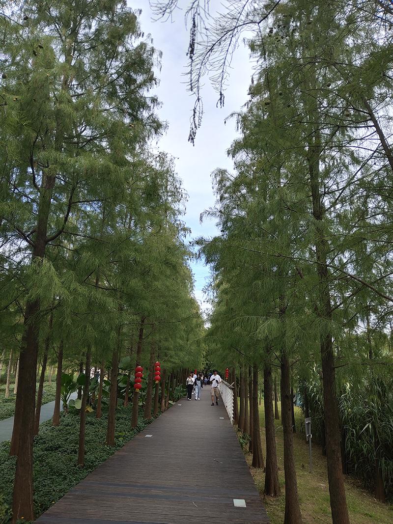 周末开共享汽车去广州的大观,蓝天白云下面闲游湿地公园太惬意~~~